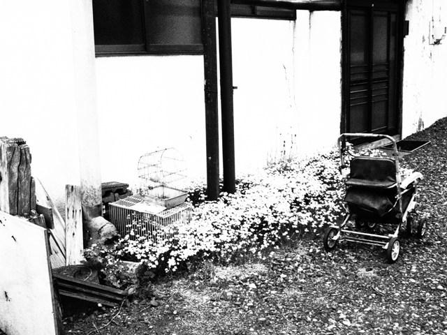 北海道 2013・6・9 (115).JPG